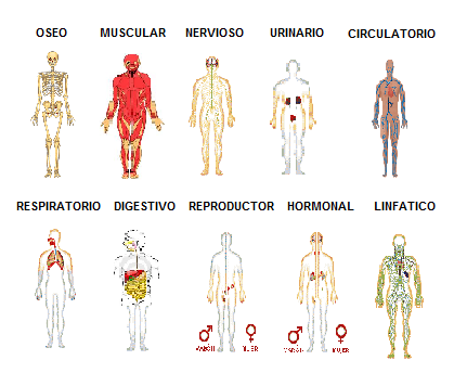 Sistemas Y Aparatos del Cuerpo Humano