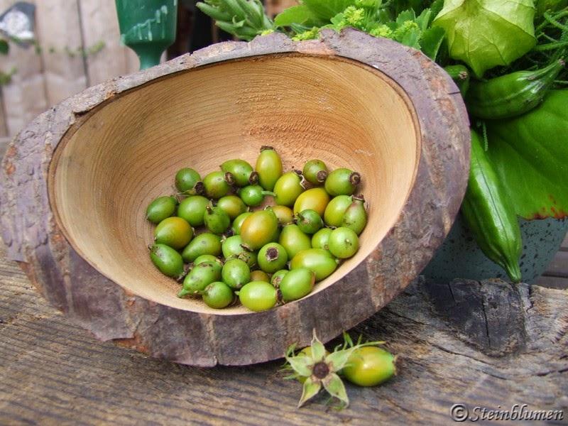 gruene Hagebutten