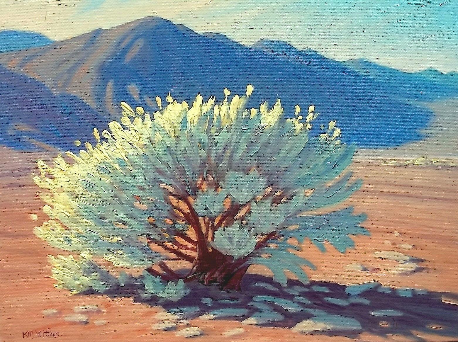 'Desert Glory'