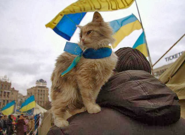 Meanville in Ukraine Cat Protester