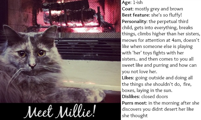 Dating If Profiles Cats Had Online