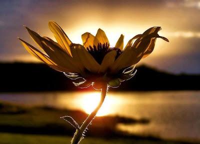 Träume, Wünsche, Zweifel, Verstand, Ziele, Glaube, Überzeugung, Erfahrung, Leben, Menschen, Glück, Erfüllung, Sehnsucht, Hoffnung, people, life, happiness, positiv denken, Gedanken fokussieren,