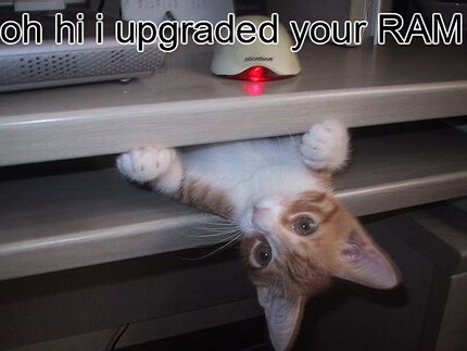 funny cat-25