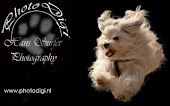 Hundefotos vom Profi