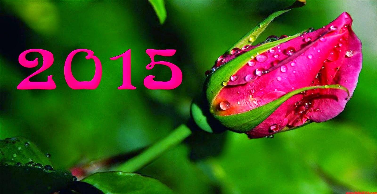 Feliz Año 2015, parte 2