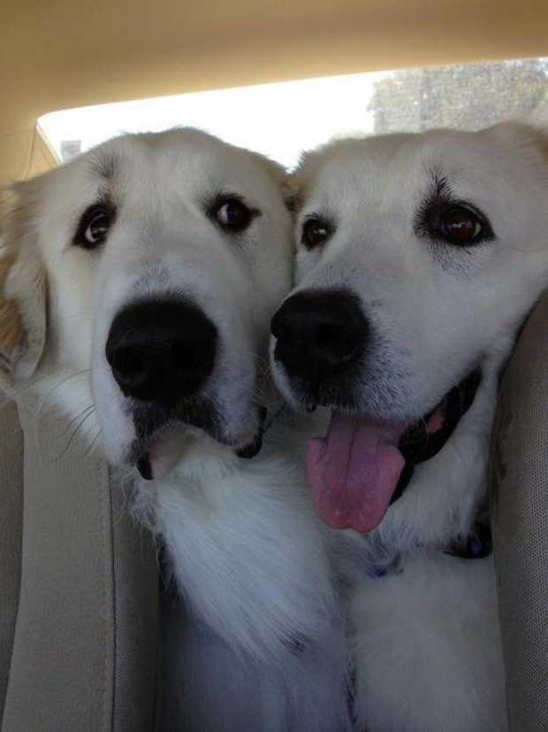 Cute dogs - part 87, funny dog pictures, adorable dog photos, funny dogs