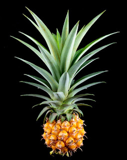 Pineapple Fruit Tropical