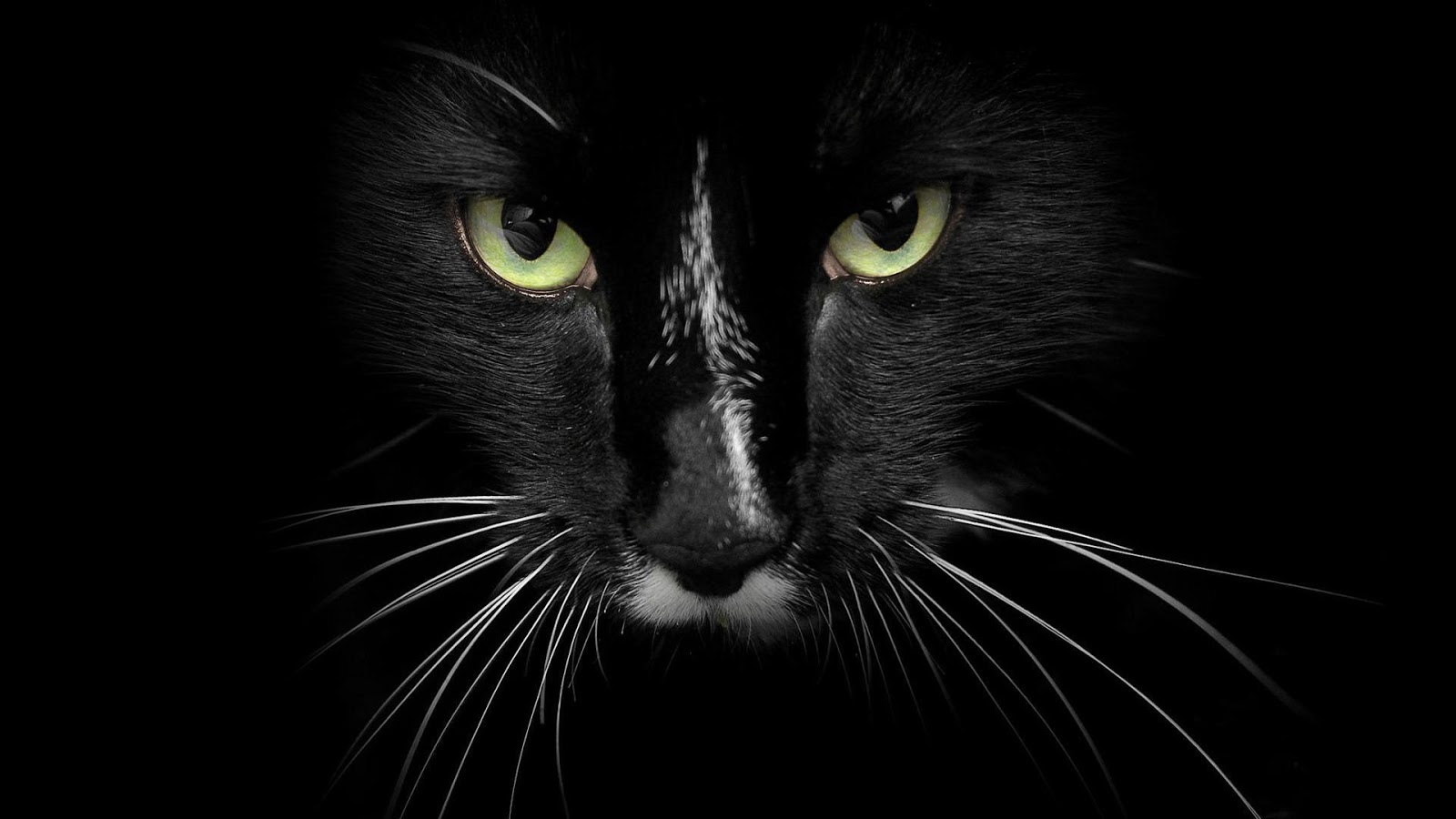 Black Cat HD Wallpaper  All the Latest and Exclusive HD Wallpapers