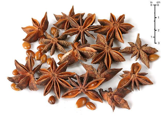 Бадьян (звездчатый анис): звезда среди пряностей.