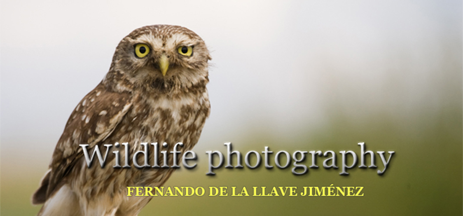 Wildlife photography... en tierras griegas