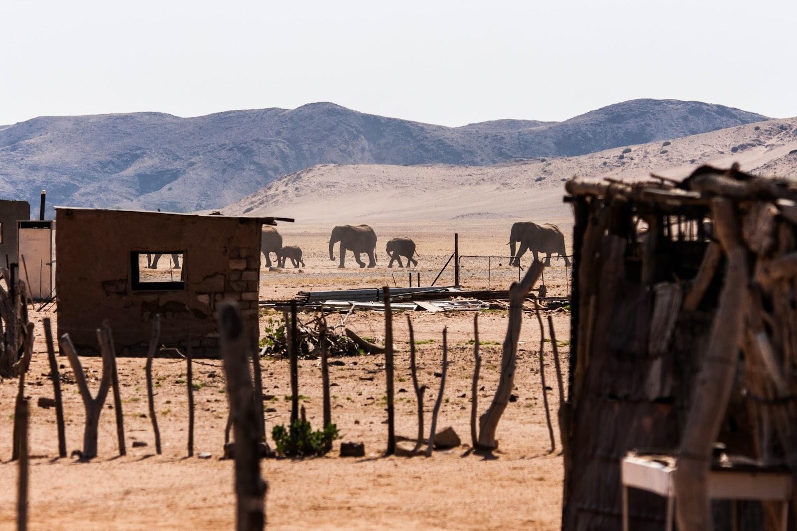 elephan's crossing damaraland namibia