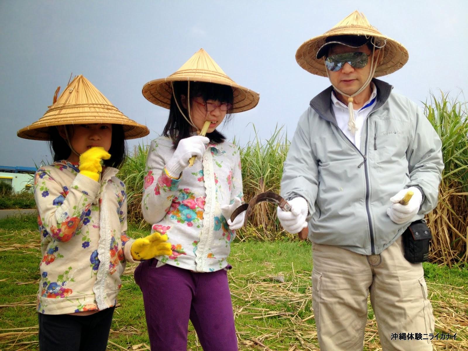 体験/観光 サトウキビ 家族 かじる 黒糖 手作り