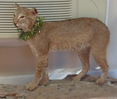 bobcat faver-dykes state park florida by http://dearmissmermaid.com