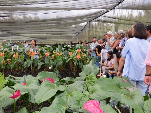 Orchid Nursery Hawaii Thenurseries