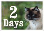 Only TWO days until we walk the walk for homeless cats and kittens!