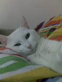 Cat'im :)