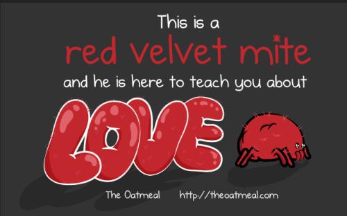 jatuh cinta seperti tungau merah