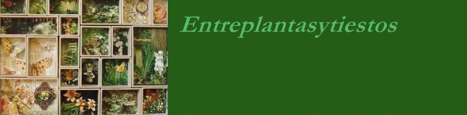 Entreplantasytiestos