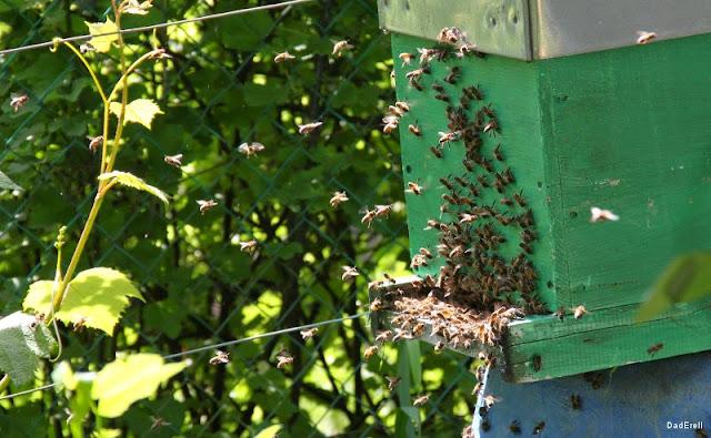 Les abeilles rentrent dans la ruche