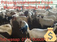 Peluang Usahasama Projek Kambing Trading Akikah