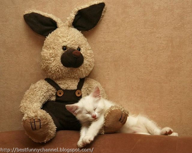 Sleeping cat and toy.