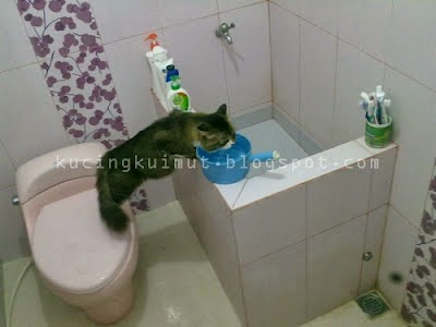 cara membujuk kucing minum di mangkuk, persuade cat to use his water fountain