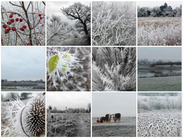 winter photos of maidenhead, maidenhead in the frost, frosty photographs, laura hol art, english winter photographs