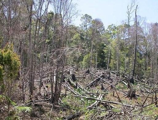 Pengertian Suksesi Alami dalam Ekosistem