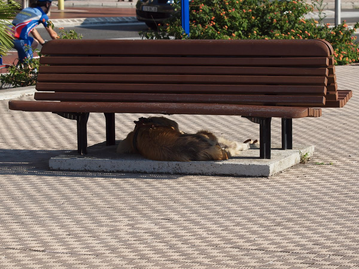 Bench For Dogs Menton Daily Photo The Dog Under The Bench