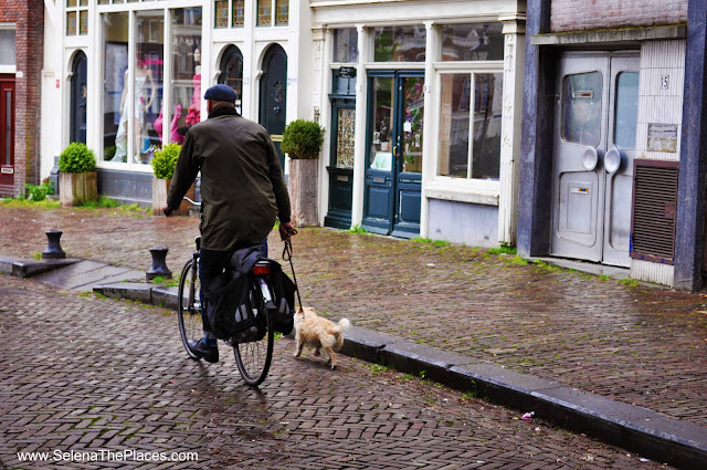 Bicycle Dog Walker Delfshaven Rotterdam