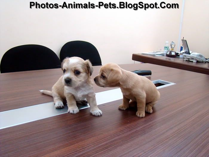 http://1.bp.blogspot.com/-nWKhfXwjitM/Th09BtyHZFI/AAAAAAAABq4/Qj_JZHgs9u4/s1600/cute%2Bpuppies_0005.jpg
