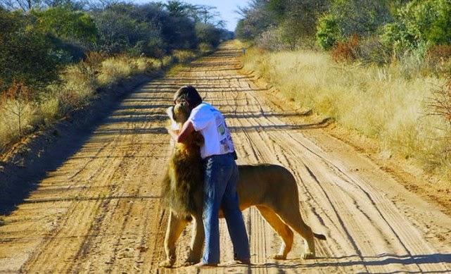 amistad entre un león y la persona que lo salvó.
