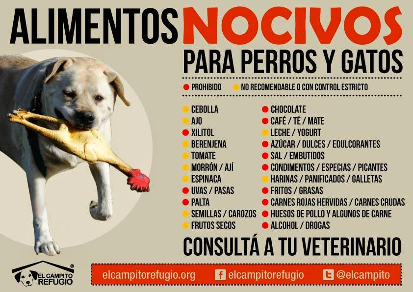 Patilocos alimentos nocivos para perros y gatos - Alimentos recomendados para perros ...