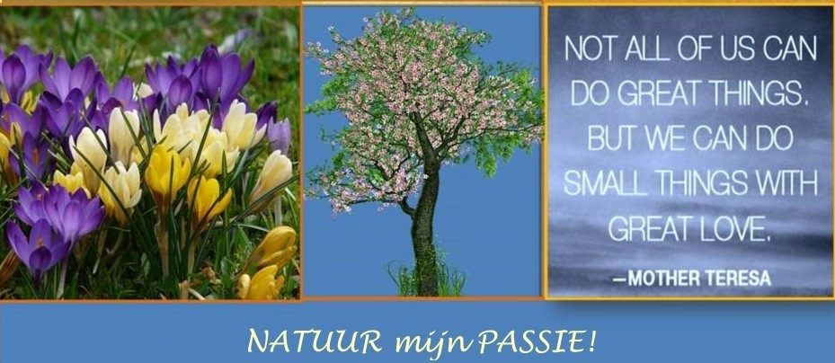 NATUUR mijn PASSIE - NATURE and POETRY