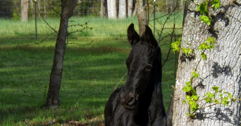 Equestrian Journey: NTTS Blog Hop: What do you do besides ride ...