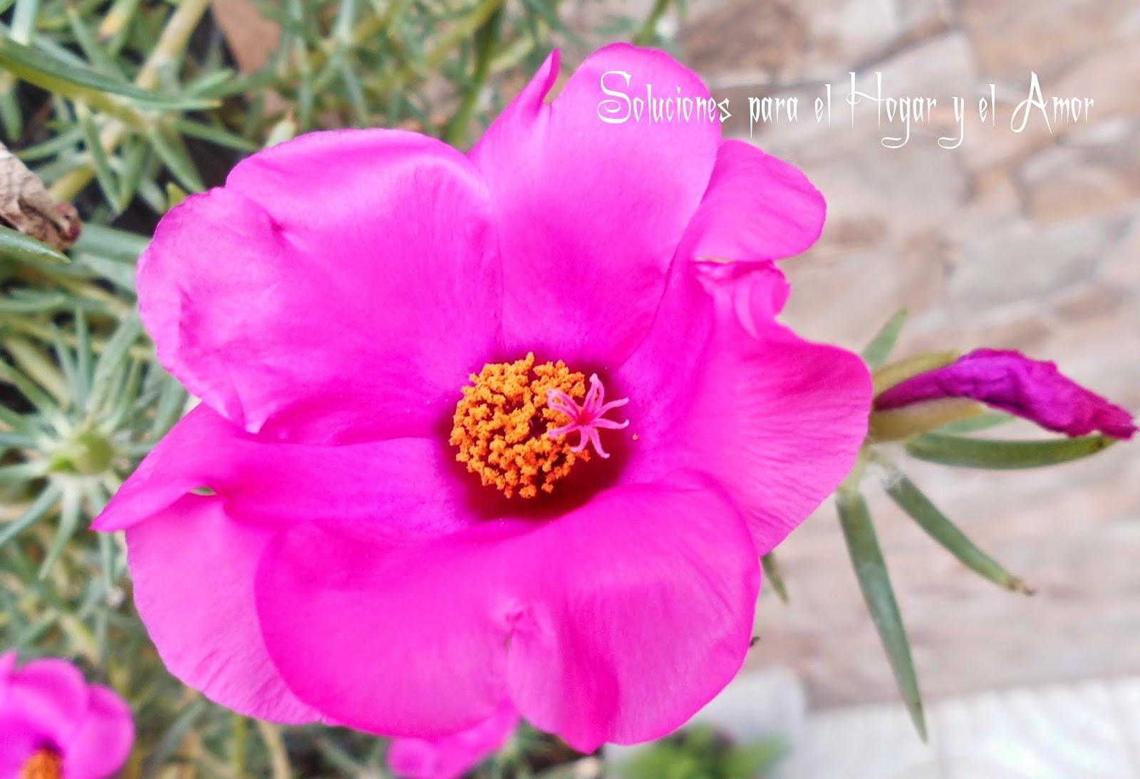 Plantas y Flores, Once Horas, Amor de un Rato