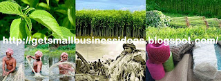 About Jute Farming Business