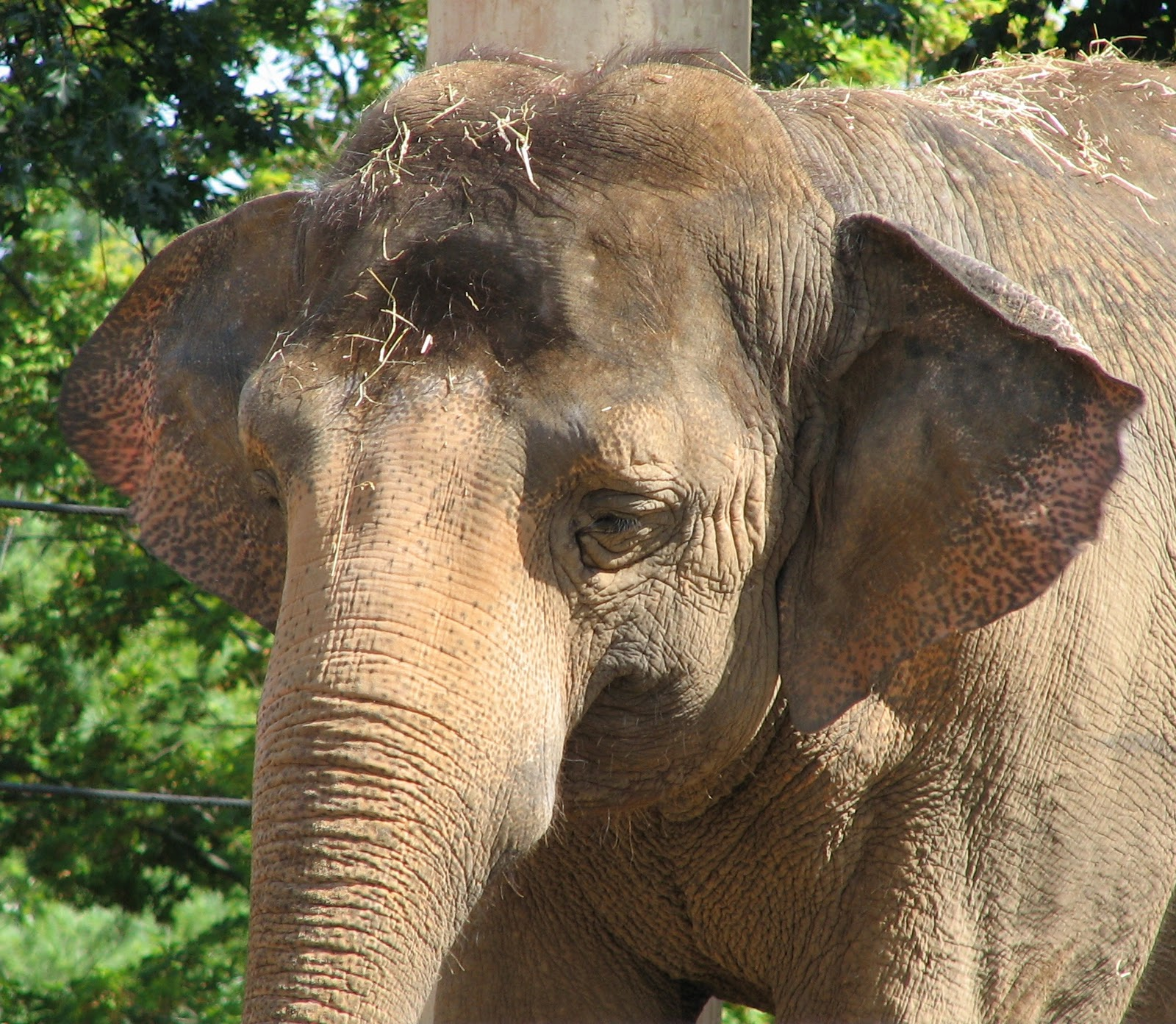 Bob 39 s bad golf september 2011 - Image elephant ...