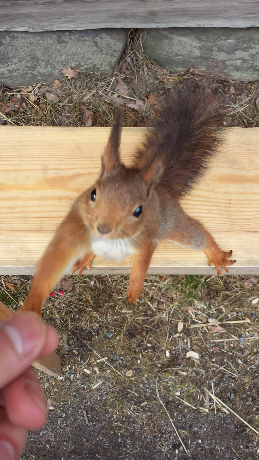 Funny animals of the week - 28 February 2014 (40 pics), squirrel handshakes human