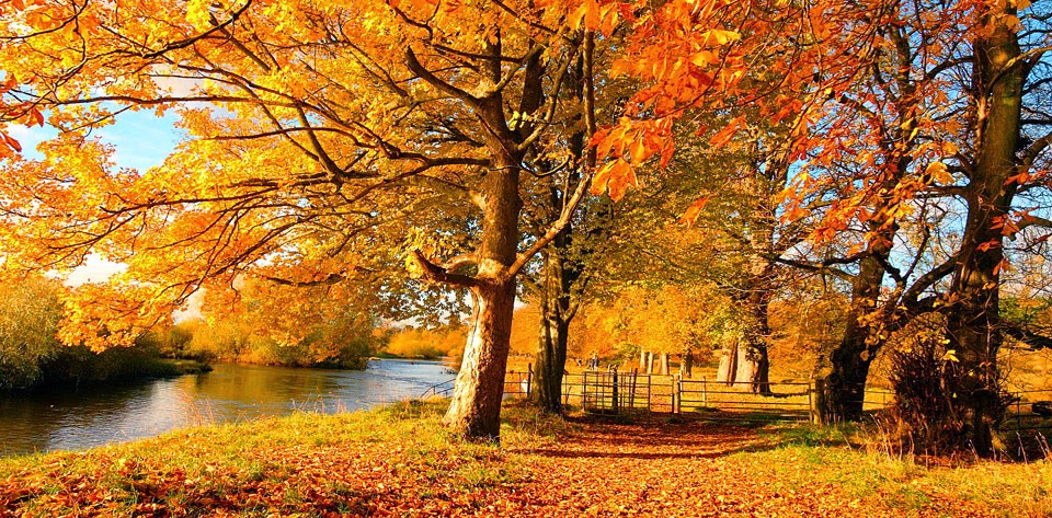 Hình nền máy tính sắc vàng mùa thu