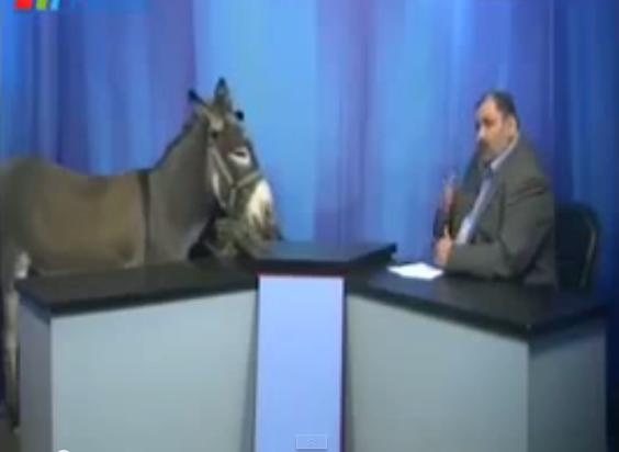 """لأول مرة في وسائل الإعلام العربية:.منشط  يستضيف """"حمارا"""" على الهواء"""