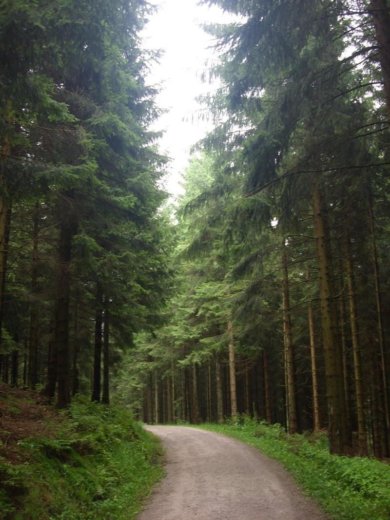 Cantando Foresta Nera