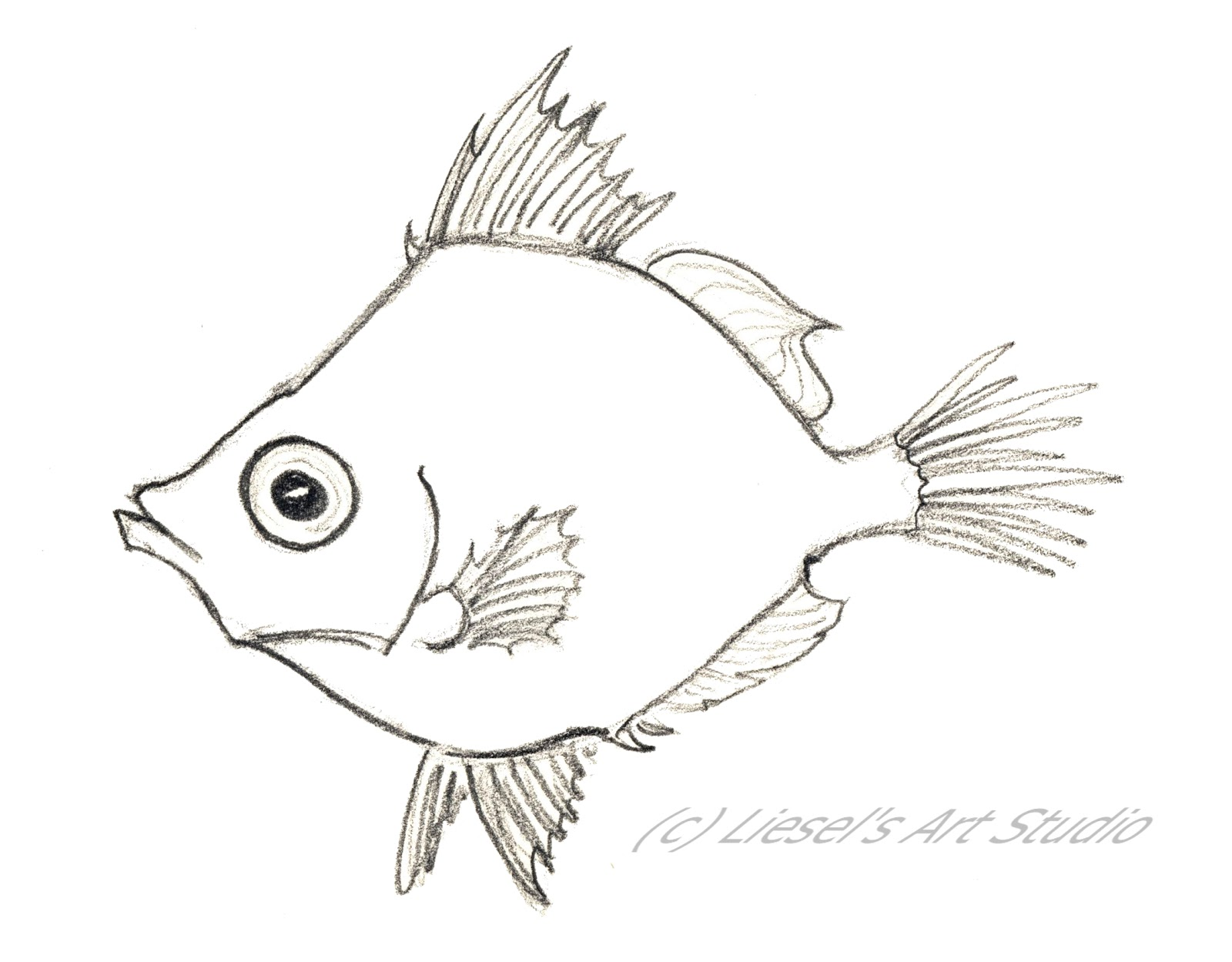 Easy Fish Drawing For Kids Boar fish.