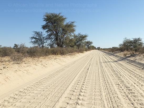 Sandy Road Kgalagadi Transfrontier Park