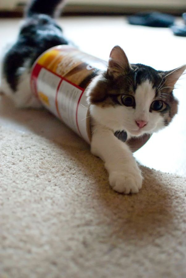cute cat in a tube, funny cat photos