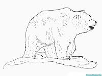 Mewarnai Gambar Beruang Besar