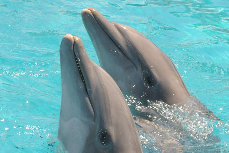 Dauphins1