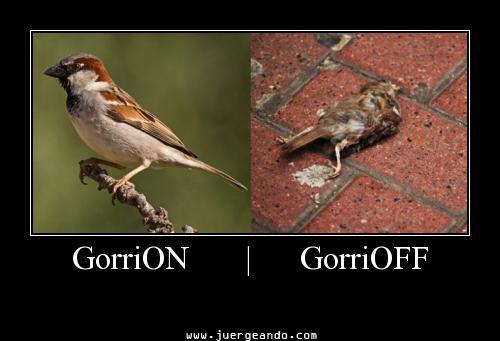 GorriON - GorriOFF