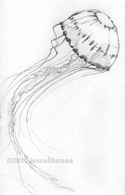 even though i showed you moon jelly fish yesterday i have sketched a different type for you today i was really taken by the beautiful trailing ruffles and