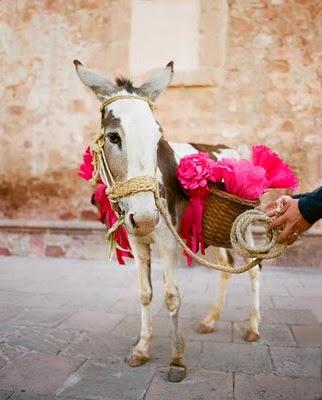 Магаре на Сватба